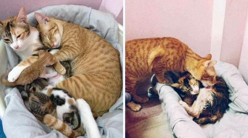 Кот-отец поддержал свою кошку во время родов (10 фото)
