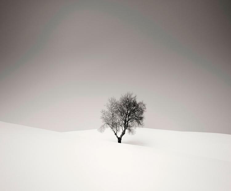дерево черно белое фото