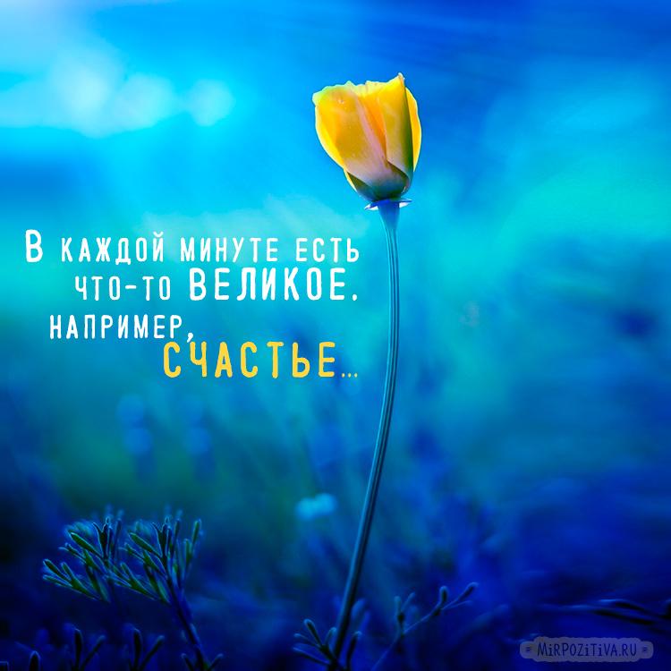 цветок: В каждой минуте есть что-то великое. Например, счастье...