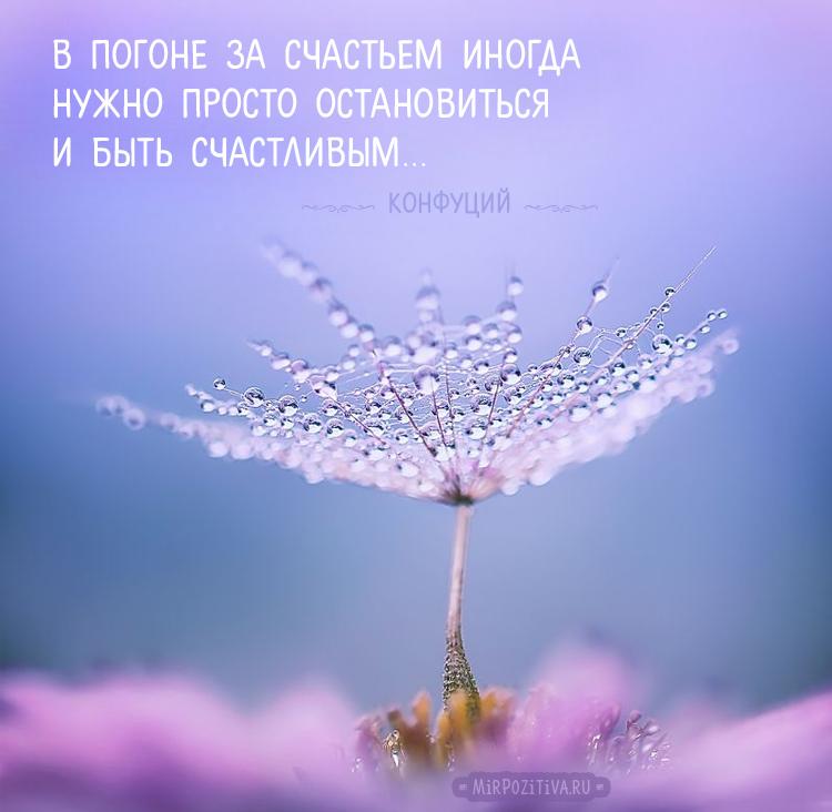В погоне за счастьем иногда нужно просто остановиться и быть счастливым. Конфуций