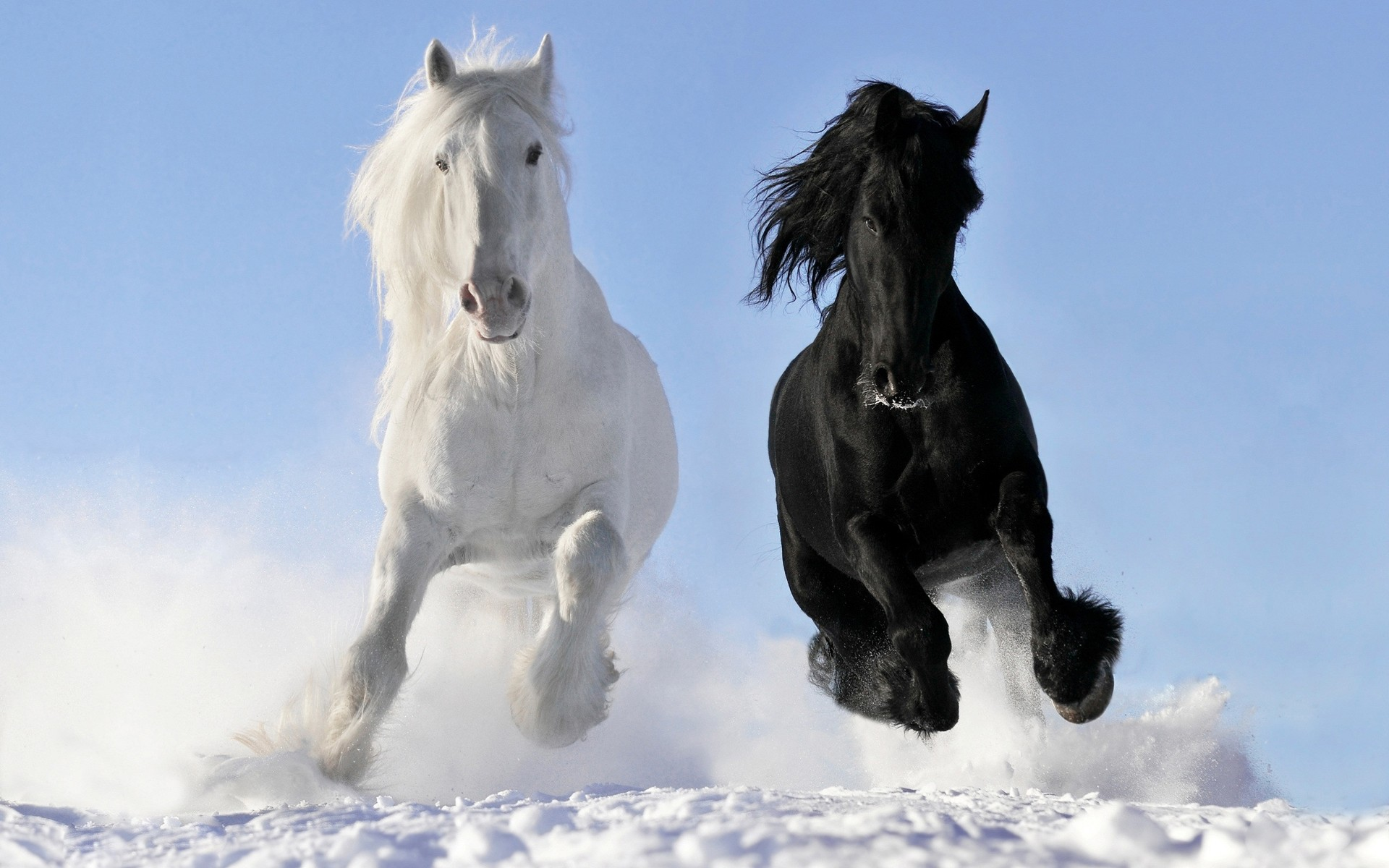 черная и белая лошадь