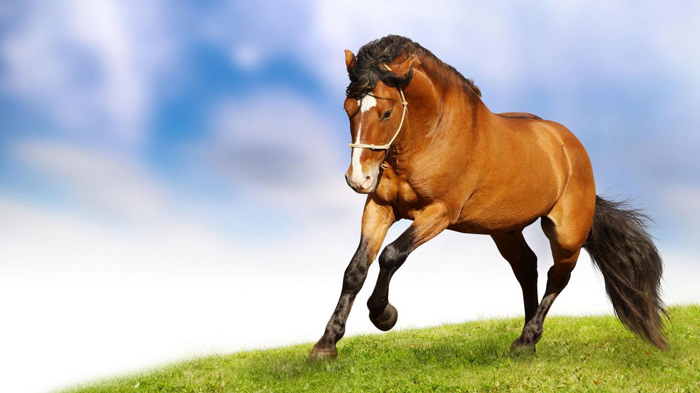 красивая лошадь фото