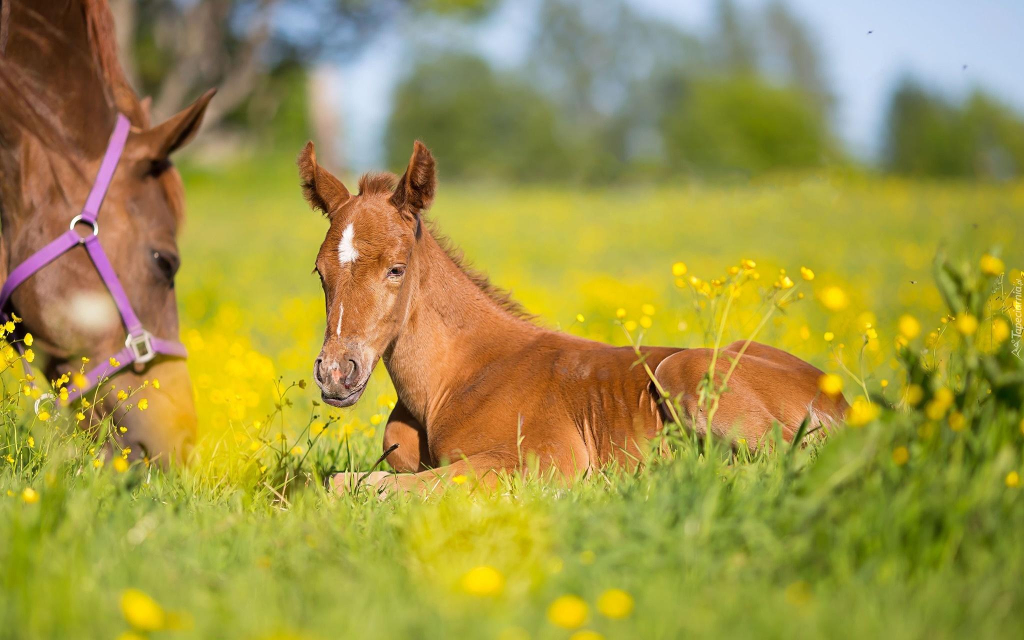 лошадка и жеребенок