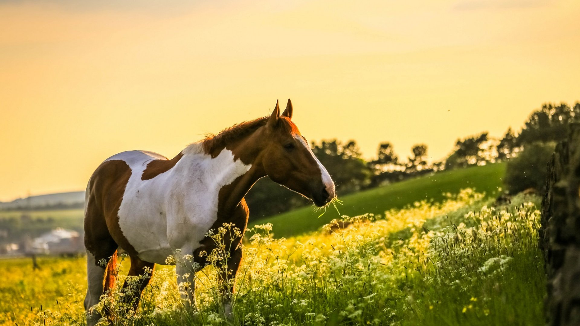 лошадка на закате