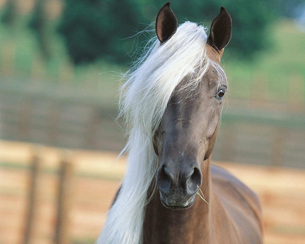 лошадь грива