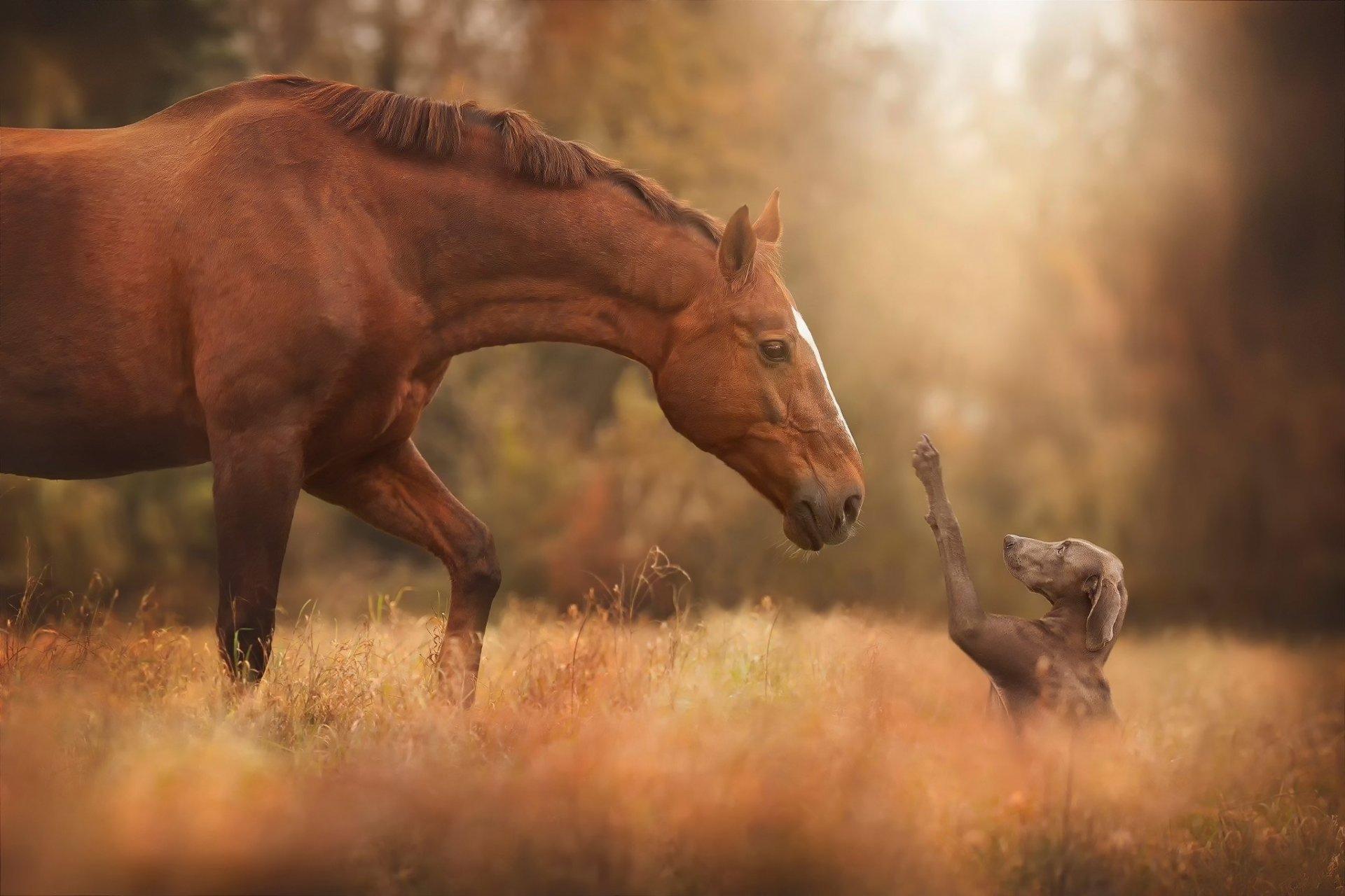 дружба лошадь и собака