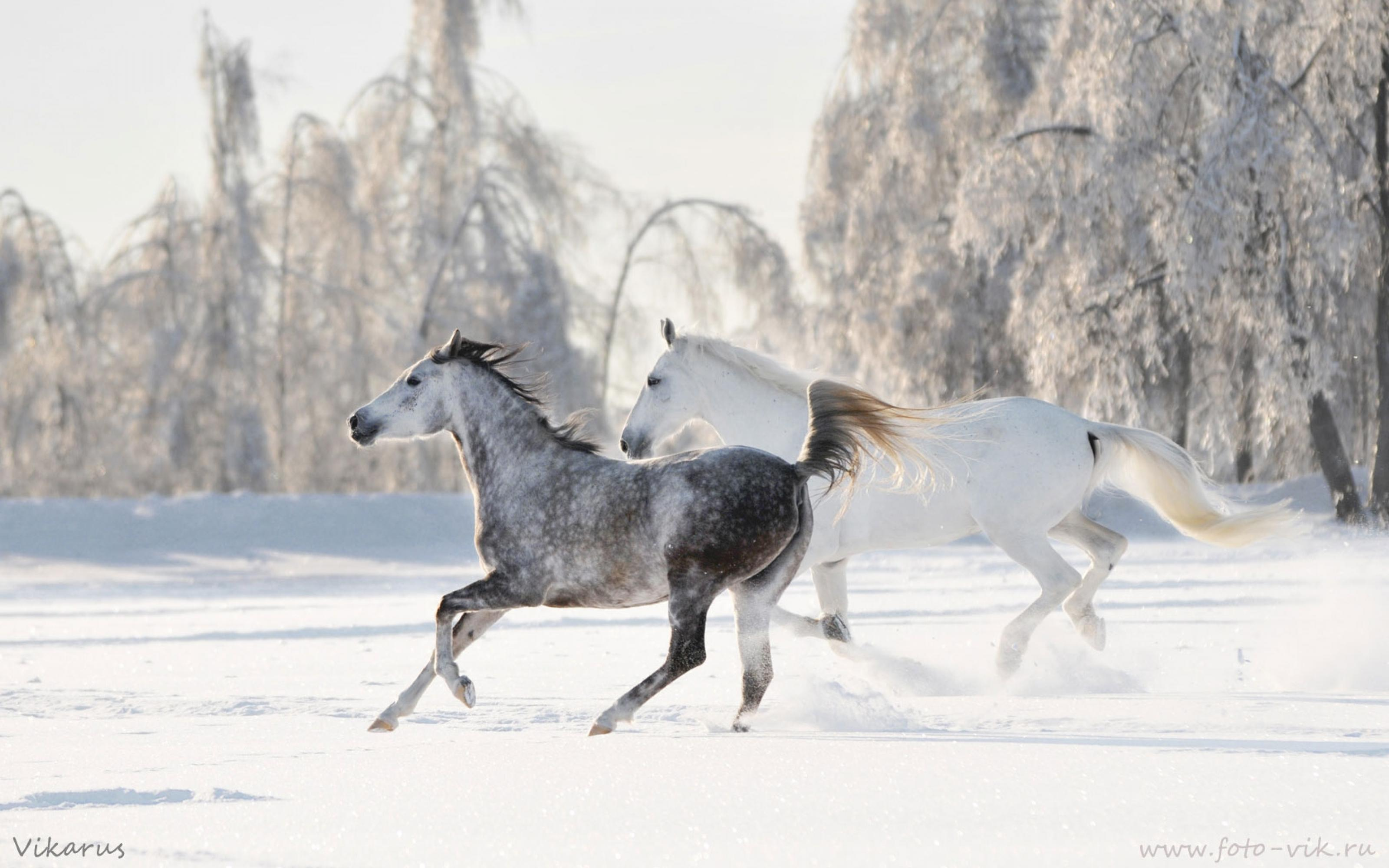 зима снег лошадь