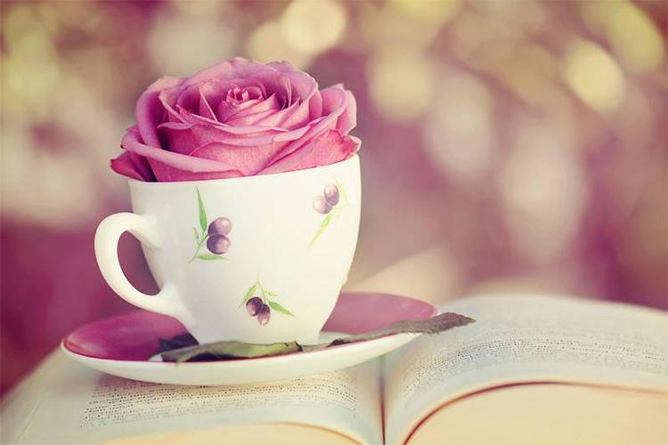 роза в бокале книга утро