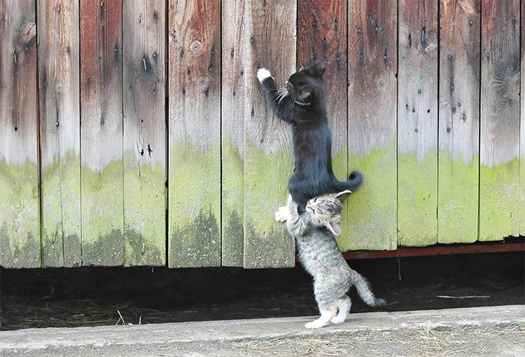 котенок помогает другому котенку
