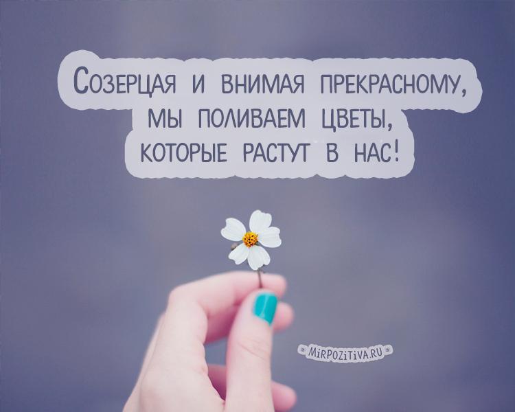 Созерцая и внимая прекрасному, мы поливаем цветы, которые растут в нас.