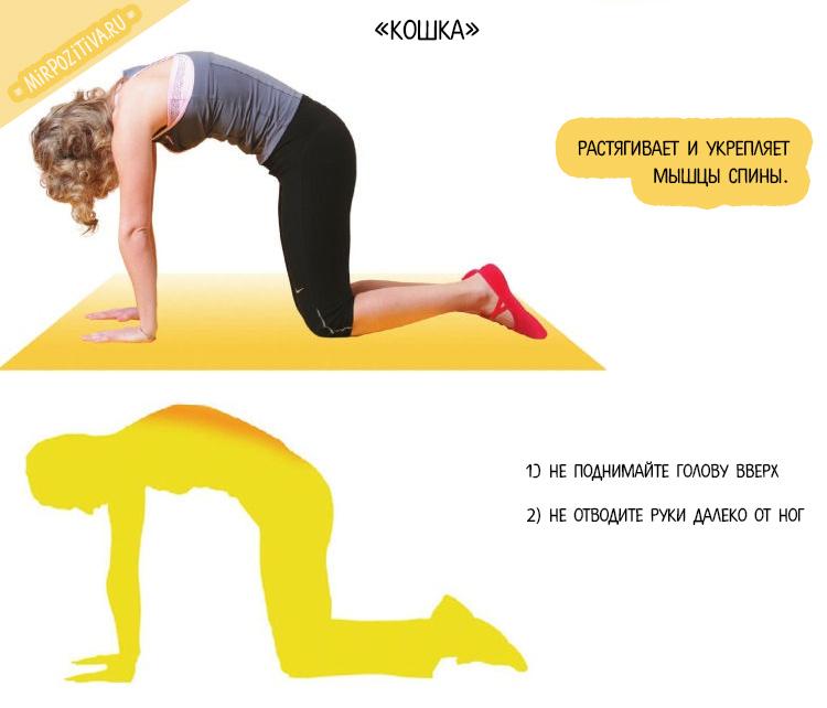 упражнение кошка с Мариной Корпан