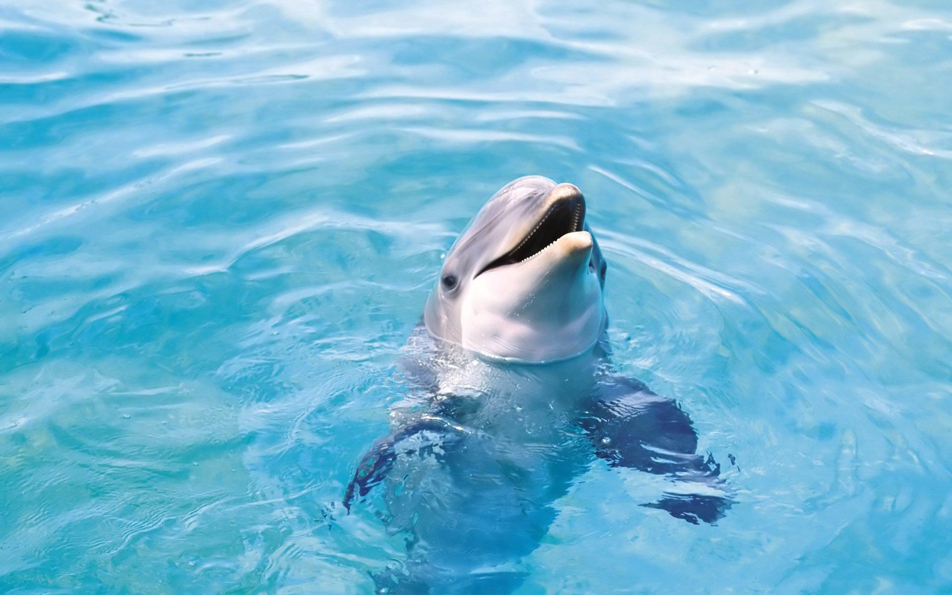 дельфин улыбка