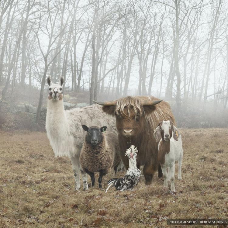 Эти животные словно позируют для обложки музыкального альбома (23 фото)