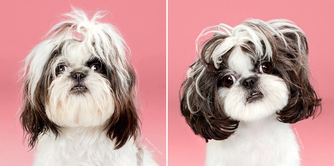 собака фото до и после стрижки