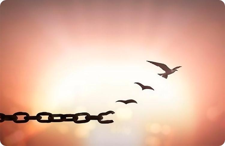 птица цепь свобода