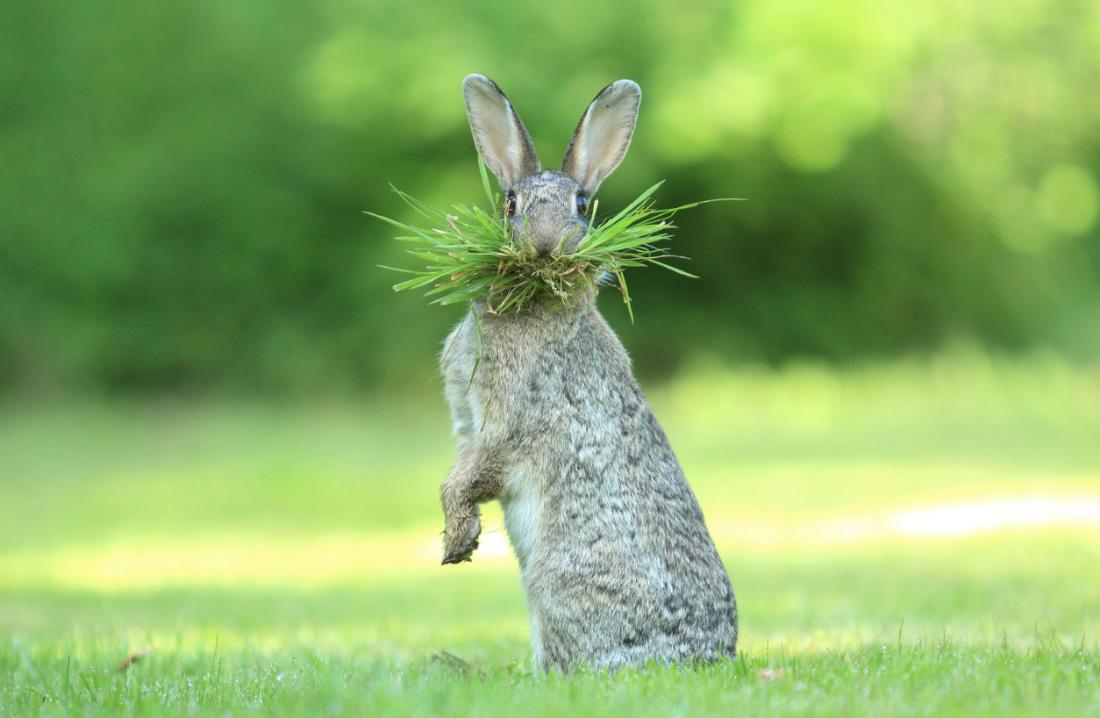 смешной заяц