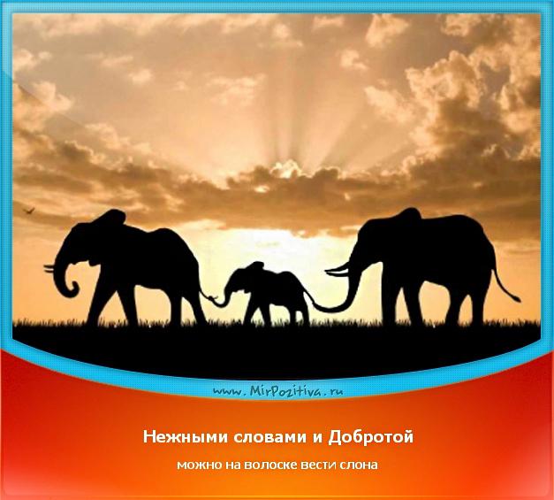 Нежными словами и Добротой можно на волоске вести слона