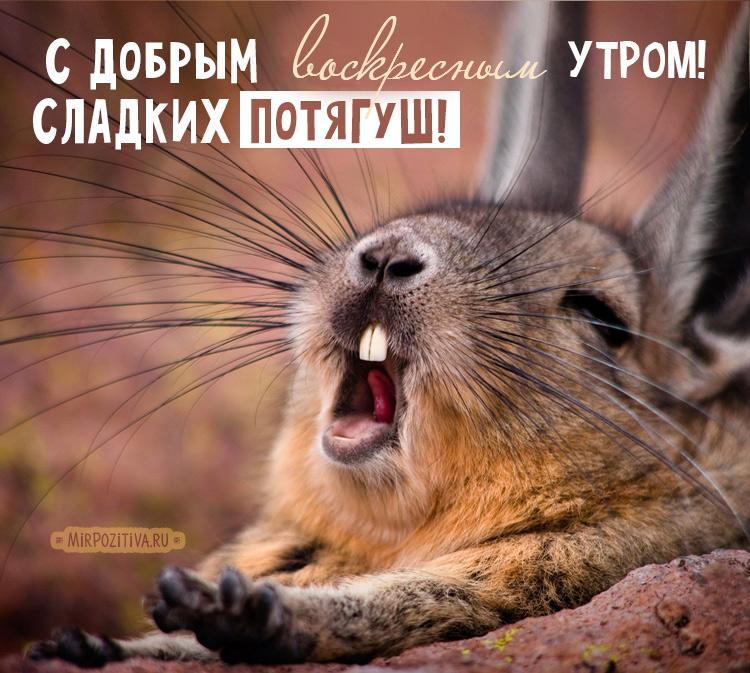 потягушки кролика
