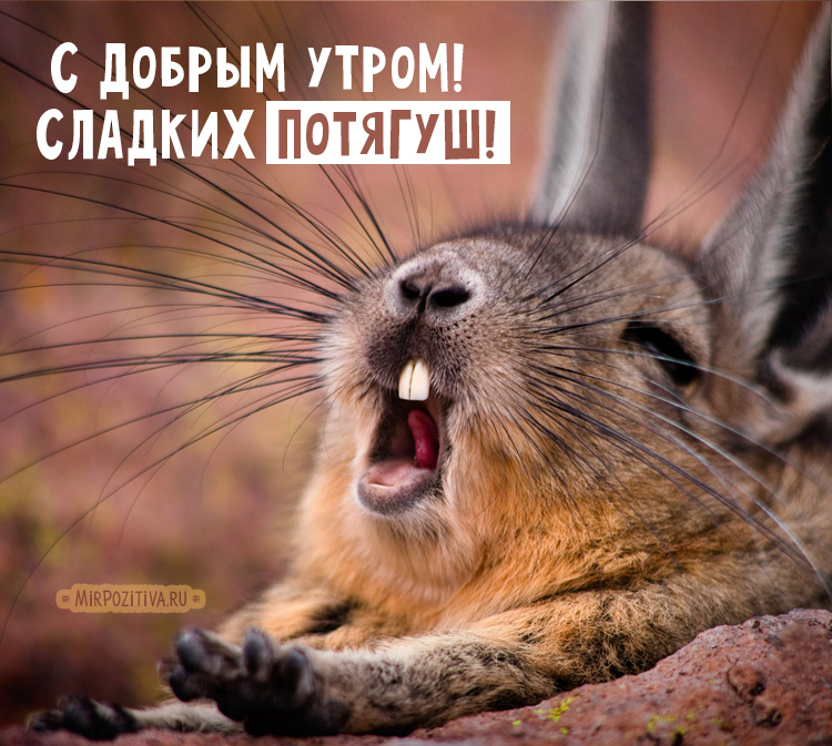 кролик потягушки деает