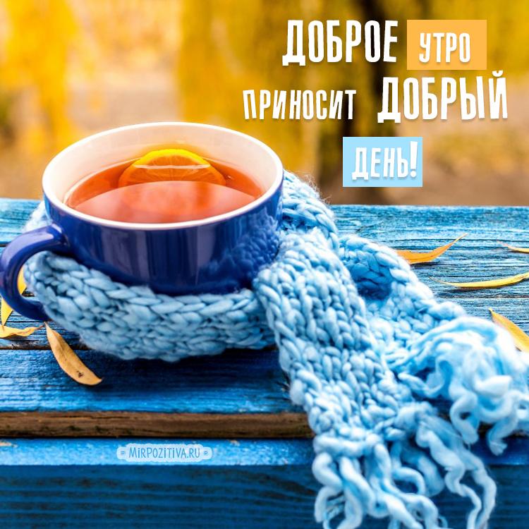 чашка в шарфе