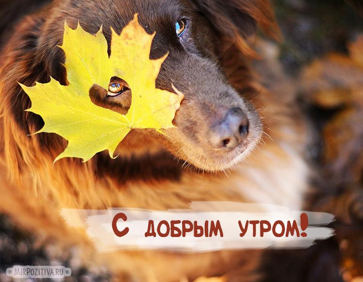 собака и лист