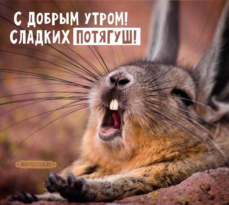 кролик зевает