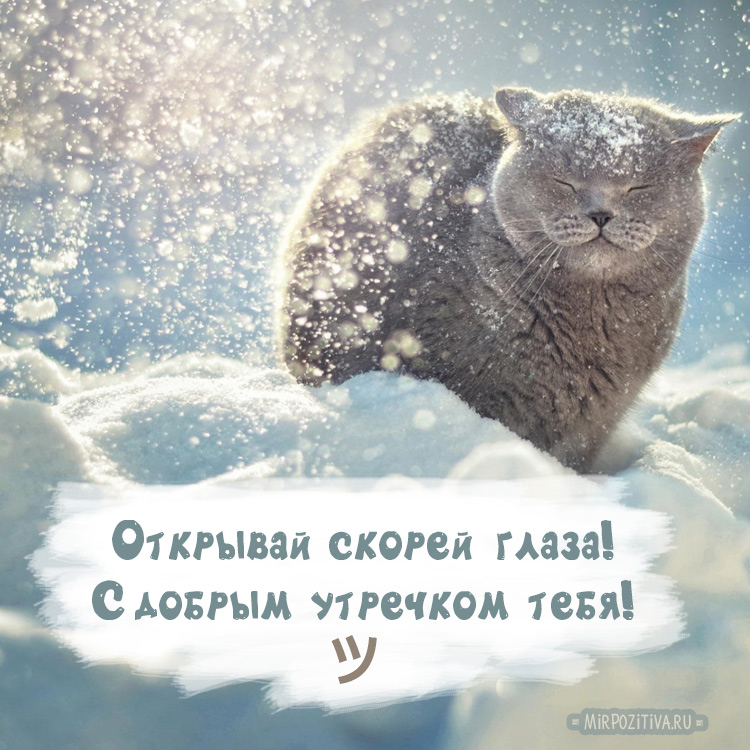 котик в сугробе