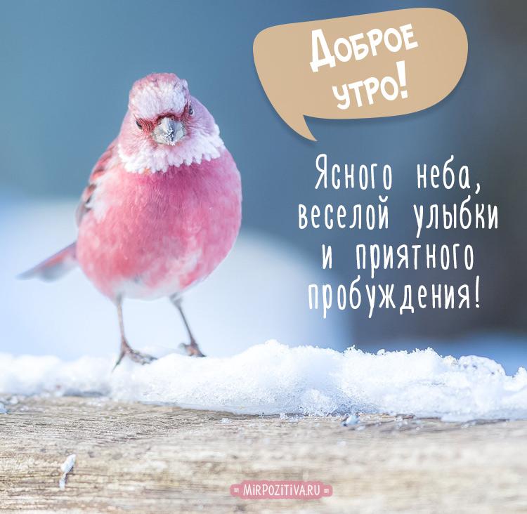 утренняя пташка