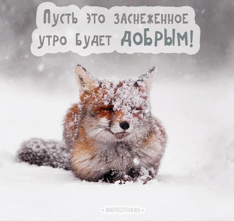 лисичку снегом замело