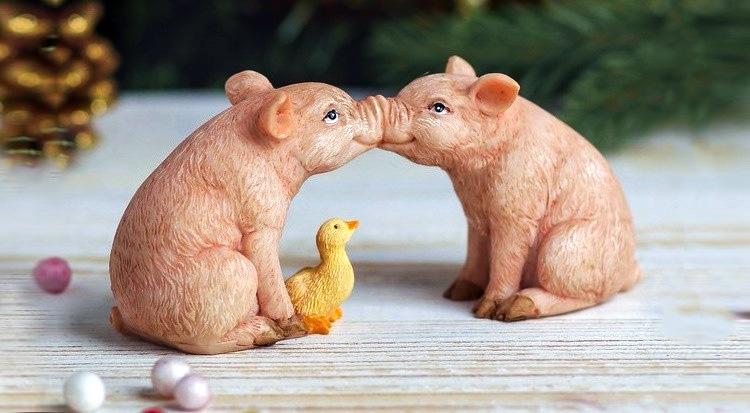 две свинки