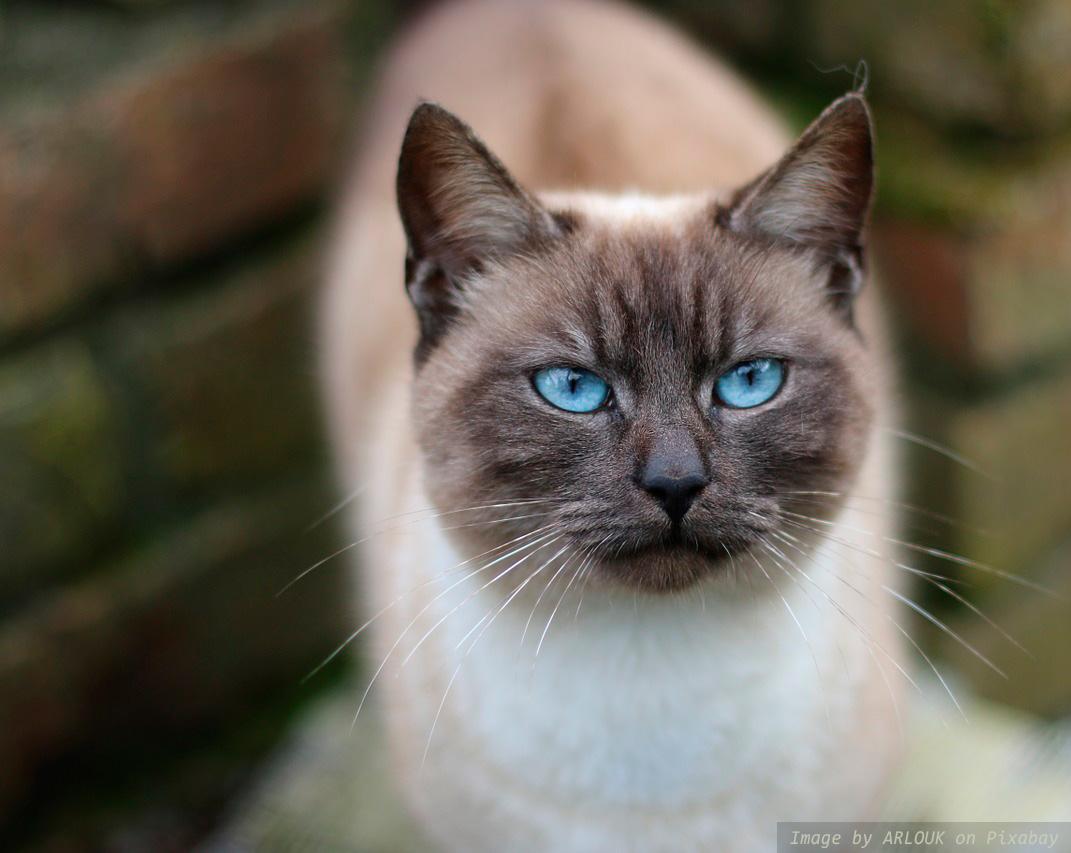 «Ловушка для кота». Смешная история от Марины