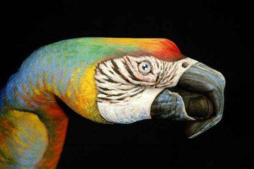 Изображение попугая на руках
