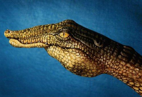 Изображение крокодила на руках