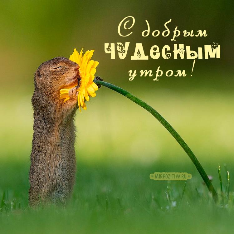 С добрым чудесным утром!