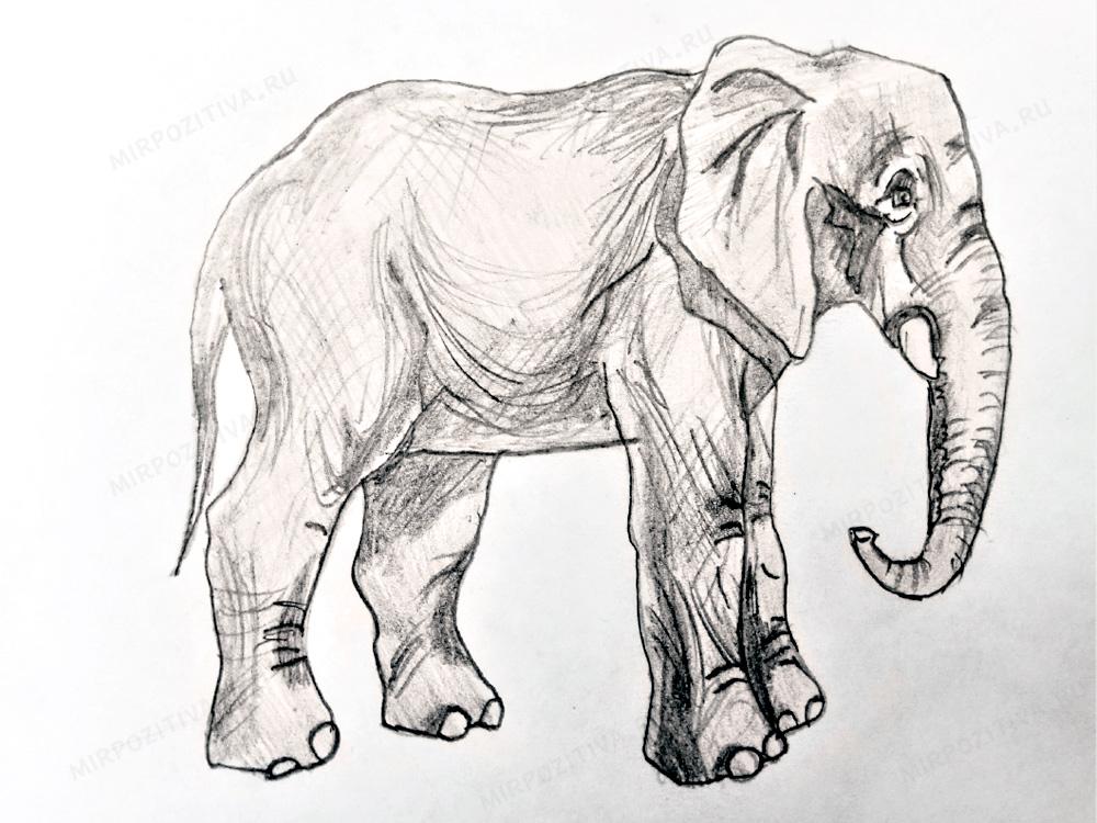 карандашный рисунок слона